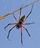 Spindel ca.8 cm