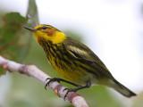 Favorite Bird Images (40D)