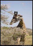 Serengeti_0965.3.jpg
