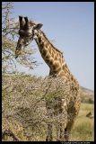 Serengeti_0967.3.jpg