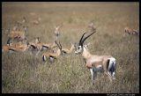 Serengeti_1031.3.jpg