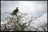 Serengeti_1064.3.jpg