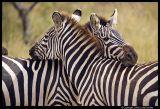 Serengeti_1086.3.jpg