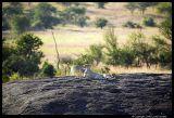 Serengeti_1179.3.jpg