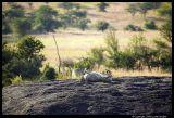 Serengeti_1183.3.jpg