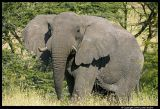 Serengeti_1341.3.jpg