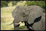Serengeti_1344.3.jpg