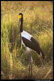 Serengeti_2203.3.jpg