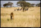 Serengeti_2226.3.jpg