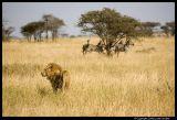 Serengeti_2228.3.jpg