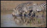Serengeti_2250.3.jpg