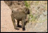 Serengeti_3082.3.jpg