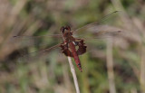 Red Saddlebag.jpg