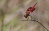 Red Saddlebags1.jpg