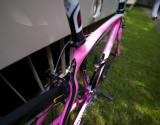 Pink Pina.jpg
