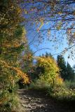 Autumnal story in Limousin (two)