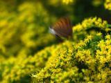 Flying butterfly