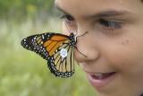 Tagging monach butterflies