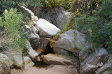 Spring in Picadilla Creek