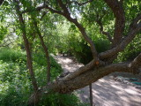 Seeing the Main Trail through Jujube Tree