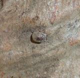 Beetle on Cactus Garden Tree