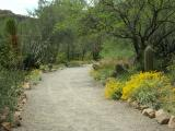 Along the main trail in the cactus garden