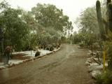 Snow falling in the Cactus Garden