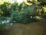 Broken Olive Branch