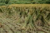 A crop