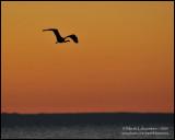 Heron on a Morning Flight