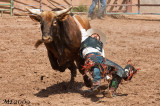 Rodeo Gallup 2009
