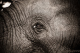 Africa in Black and White - Elephant skin