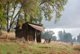 Sierra Foothills & Gold Country - November, 2008