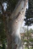 Damascus april 2009  7743.jpg