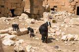 Dead cities from Hama april 2009 8705.jpg