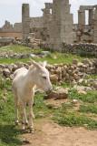 Dead cities from Hama april 2009 8733.jpg