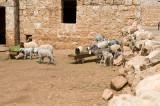 Dead cities from Hama april 2009 8738.jpg