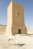 Palmyra apr 2009 9988.jpg