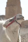 Palmyra apr 2009 0010.jpg