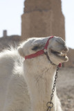 Palmyra apr 2009 0011.jpg
