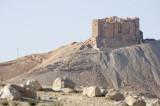 Palmyra apr 2009 0044.jpg