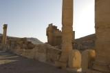 Palmyra apr 2009 0061.jpg