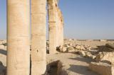Palmyra apr 2009 0079.jpg