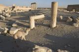 Palmyra apr 2009 0093.jpg