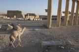 Palmyra apr 2009 0095.jpg