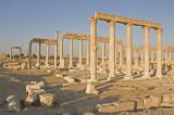 Palmyra apr 2009 0101.jpg