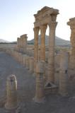 Palmyra apr 2009 0106.jpg