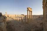 Palmyra apr 2009 0108.jpg