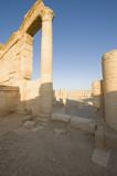 Palmyra apr 2009 0112.jpg