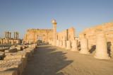 Palmyra apr 2009 0114.jpg